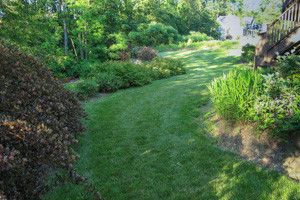 Sweeping lawn path leads to backyard area and past edging plantings of native shrubs