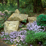 Boulders and native plantings with blooming Creeping Phlox stabilize steep shady slope