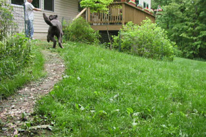 Backyard lawn path worn bare from dog activity
