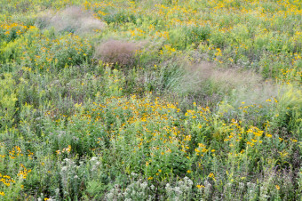 Meadow textures and designed grass drift in early fall