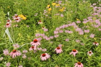 Mature diverse meadow in mid-summer color and texture glory