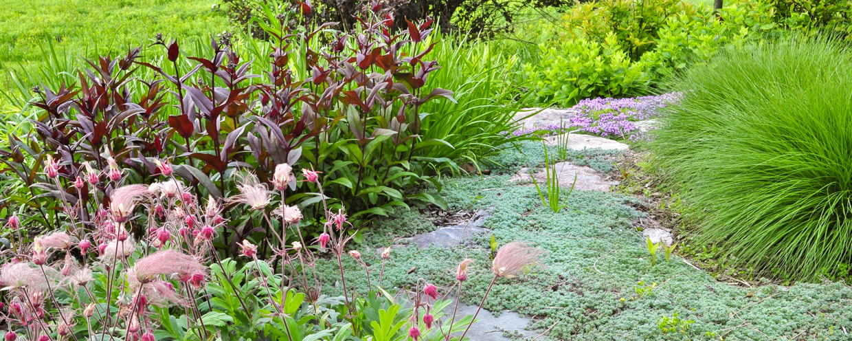 Fieldstone stepping garden path leading through mixed plantings groundcover